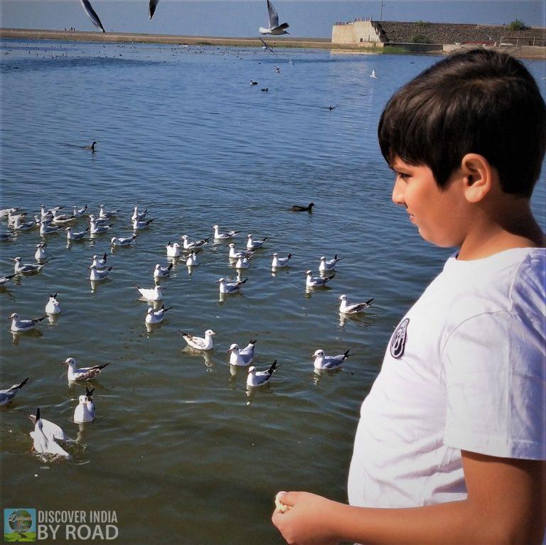 Triveni Sangam Birds feeding