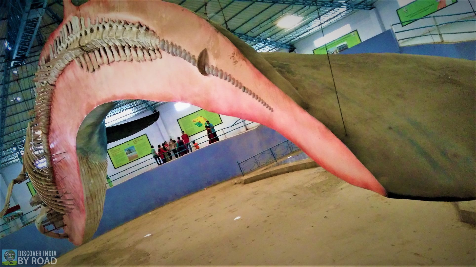 Whale Cut out at hill garden bhuj