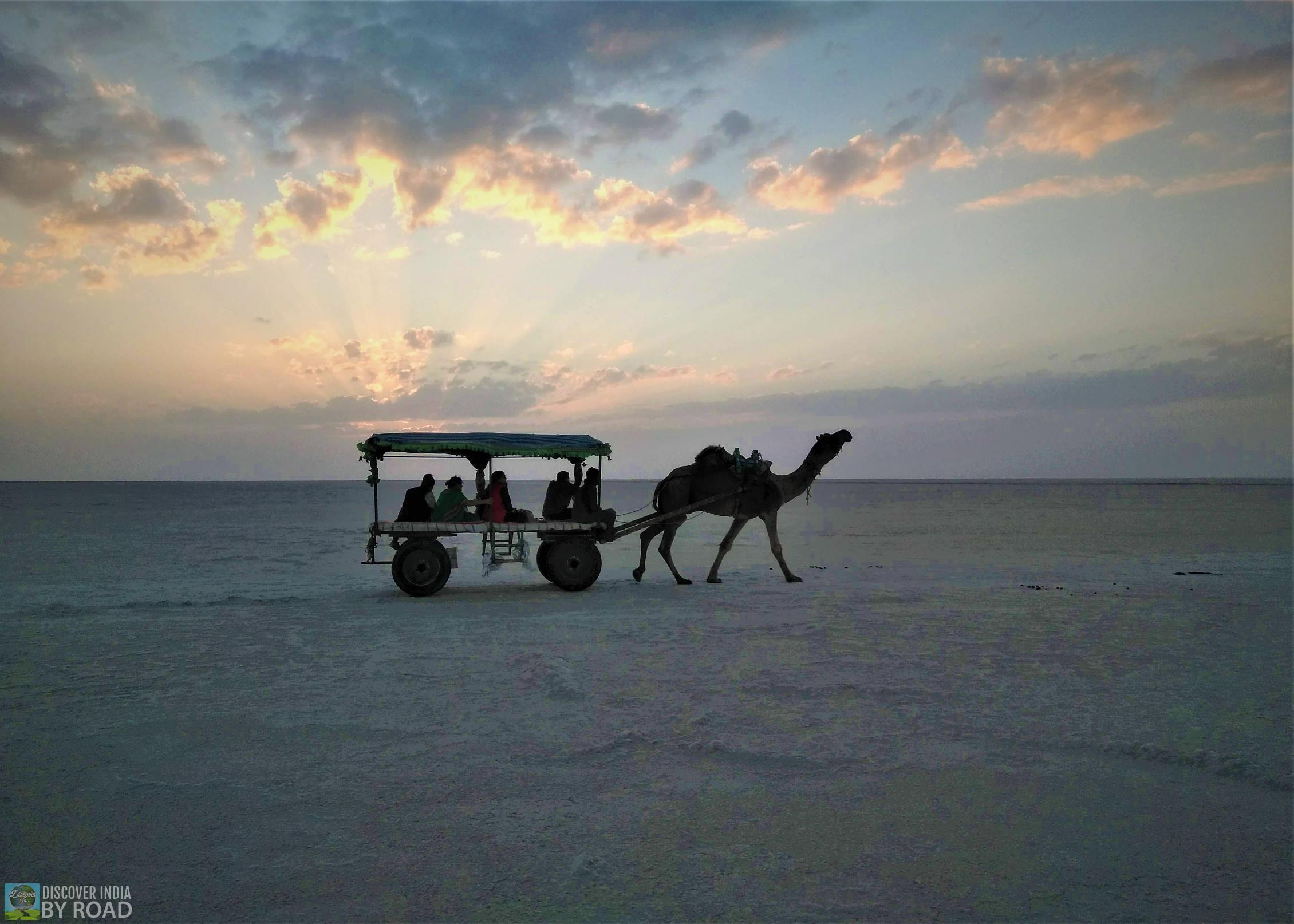 View of Rann of Kutch with Camel cart safari
